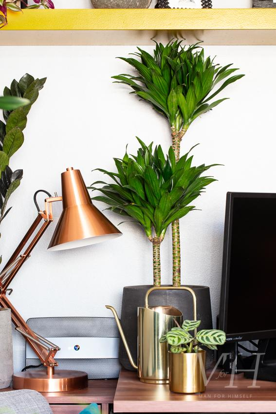 the-joy-of-plants-home-transformation-man-for-himself7