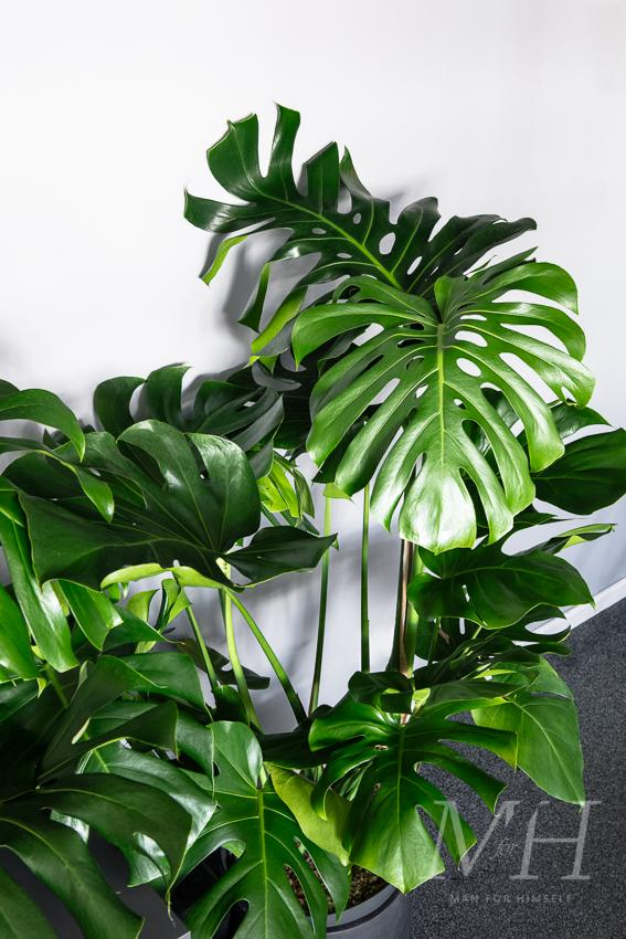 the-joy-of-plants-home-transformation-man-for-himself3