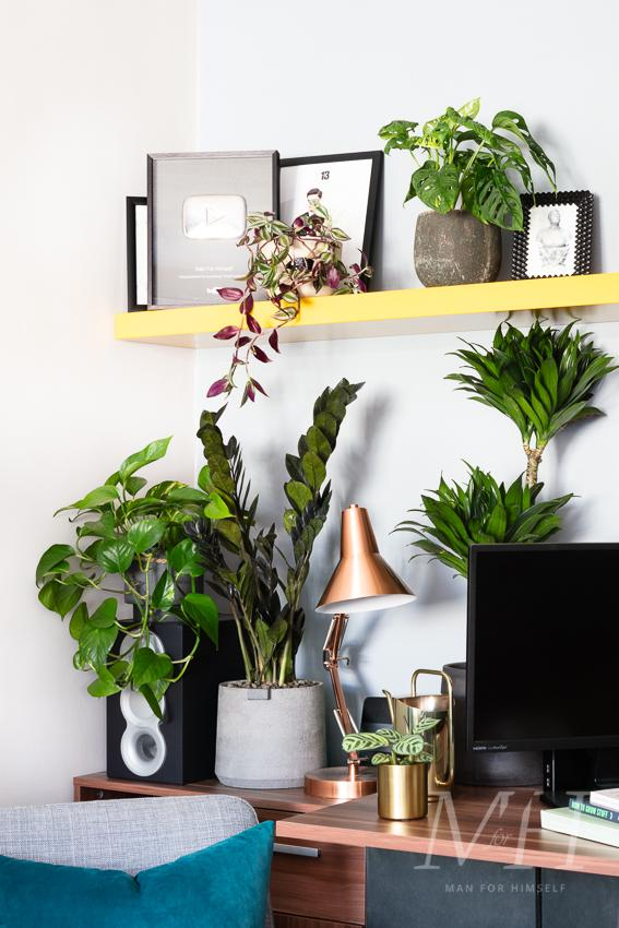 the-joy-of-plants-home-transformation-man-for-himself5