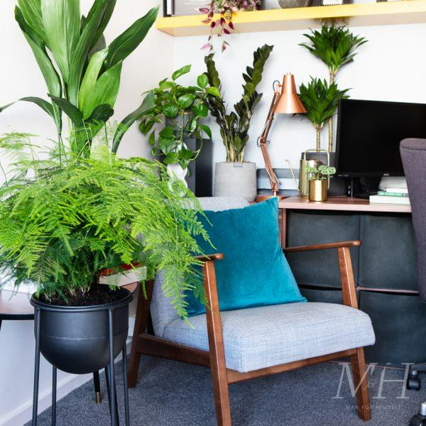 The Houseplants You Need For Your Home Office